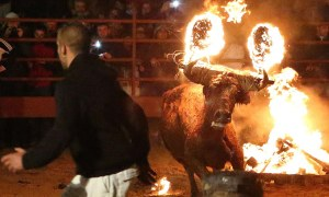 """Toro Jubilo"" (Joy of the Bull) festival in the Medieval village of Medinaceli, in the province of Soria, north east of Madrid."
