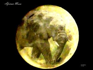 africanmoon